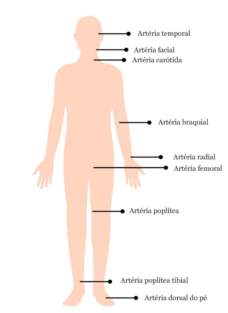 Locais do corpo onde medir o pulso